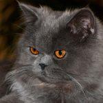 Jak przechowywać karmę dla kota?