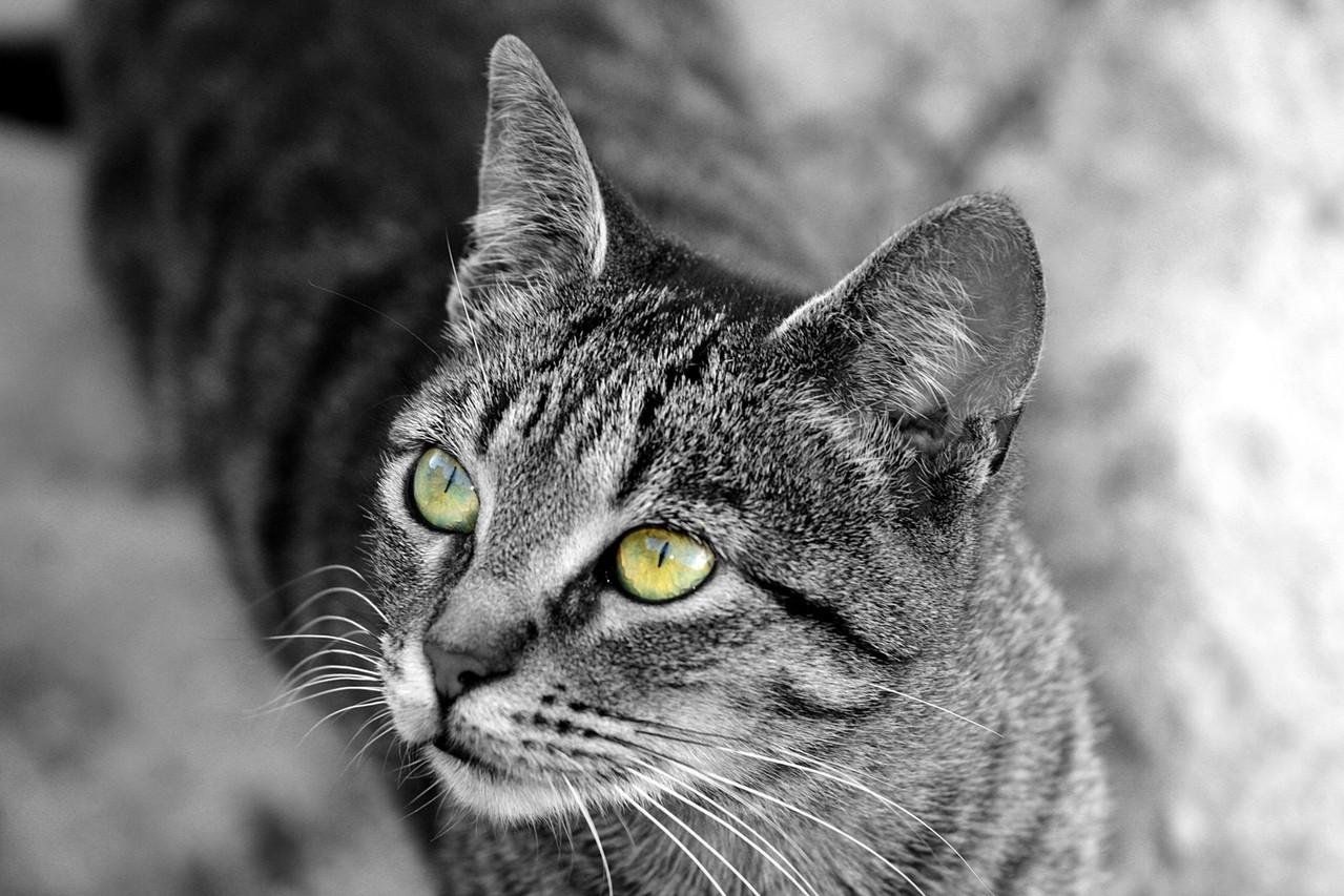 Jaką karmę kupić dla kotów ze schroniska?