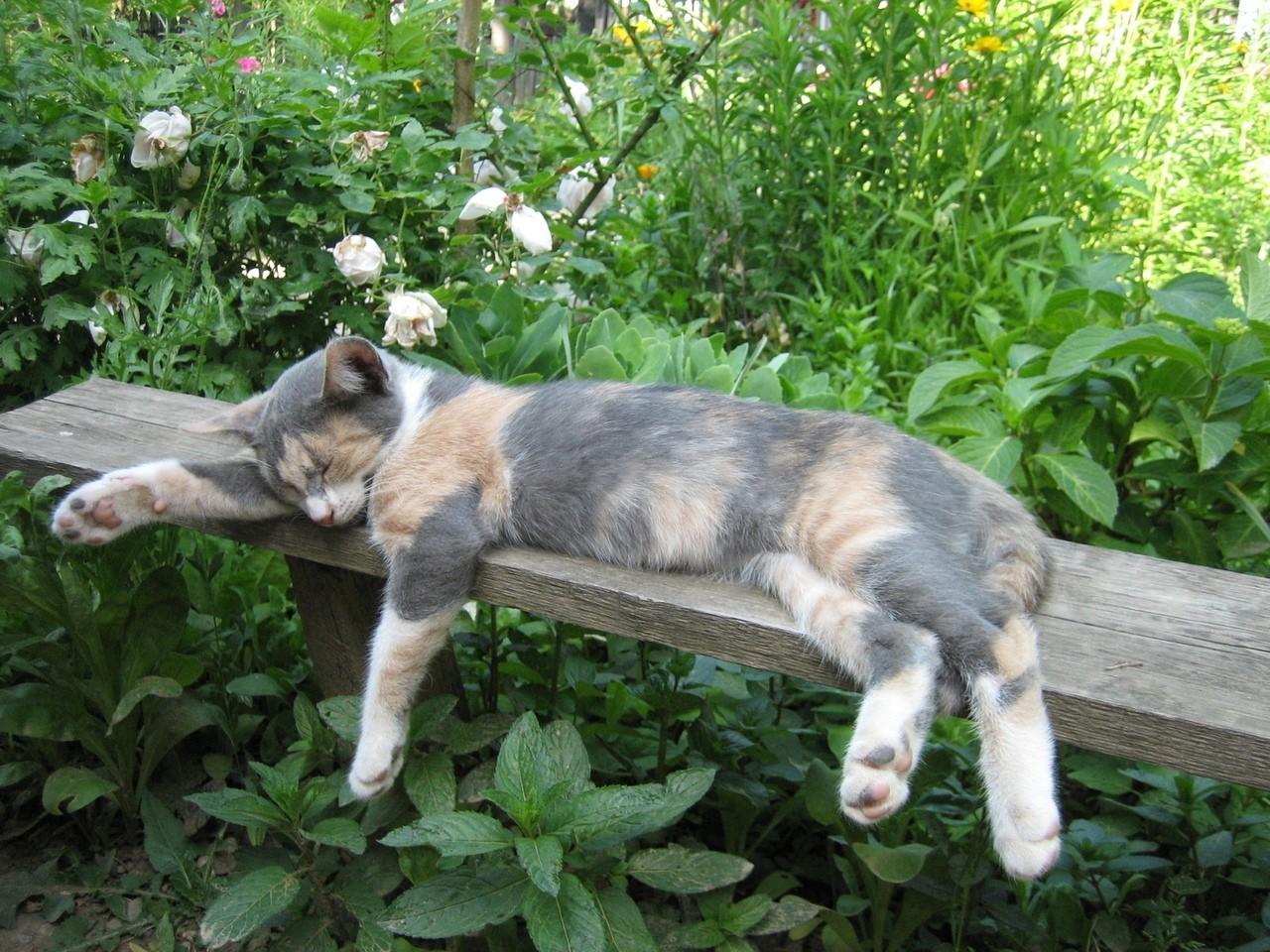 Jakie składniki odżywcze powinna mieć karma dla kota?