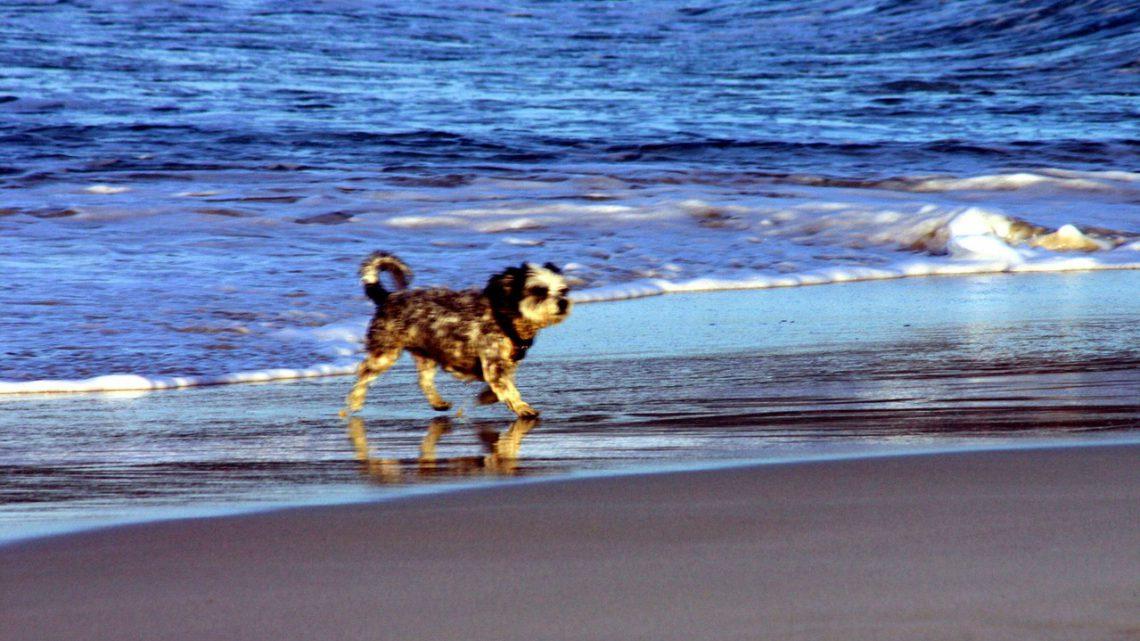 Cechy dobrego przedszkola dla psów